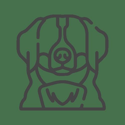Bernaise Dog icon